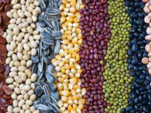 El Arca de Noé de las semillas españolas en peligro de extinción